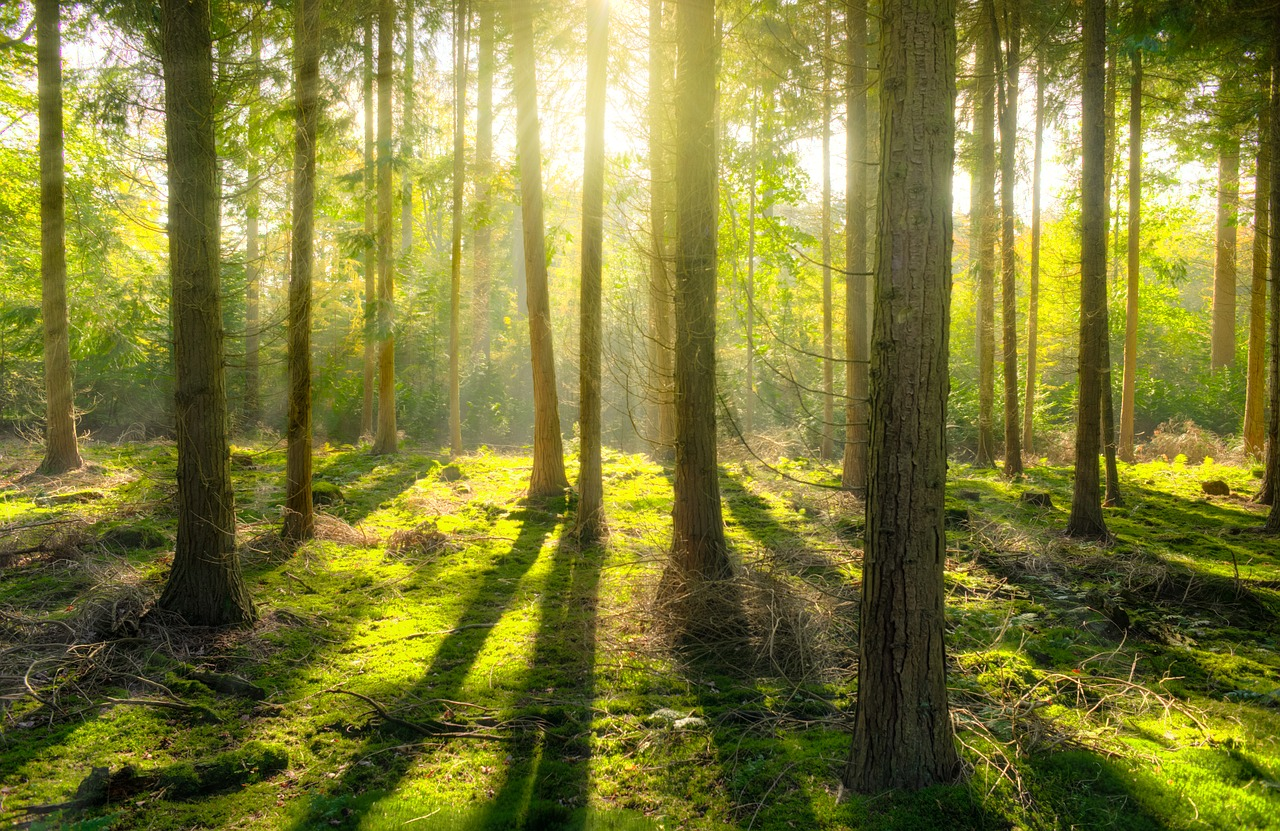 Earth, forest, light